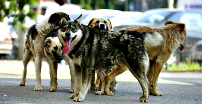 image-2011-07-20-9475173-70-cainii-comunitari