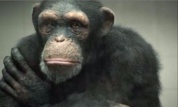 la-final-maimuta-indreapta-pistolul-spre-cap-peta-a-lansat-un-nou-video-poate-cel-mai-emotionant-de-209238 (1)