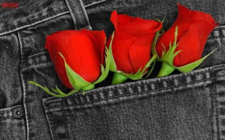 trei-trandafiri-rosii-wallpaper-felicitari