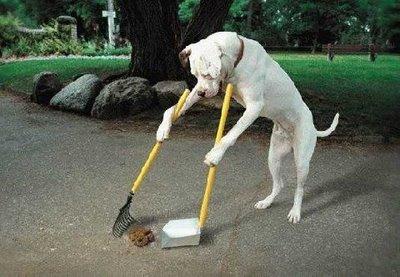 DogCleaningPoop-thumb-400x277